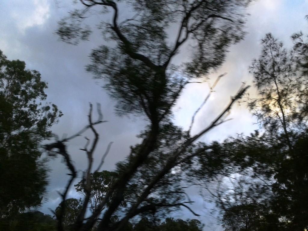 GubbiGubbi trees n sky